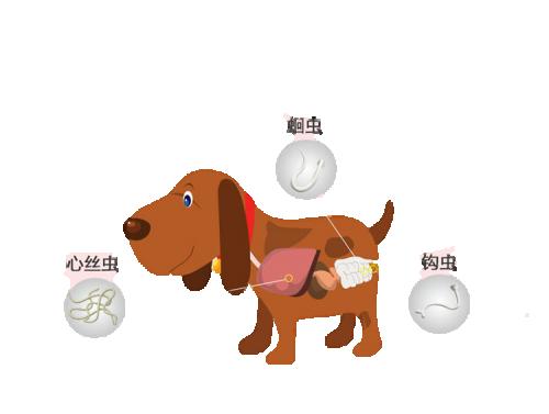 狗狗体内驱虫药哪种好?我有选择困难症