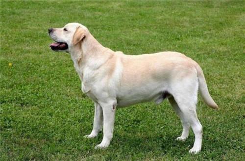 怎么辨认狗狗要驱虫了,以及怎么选择驱虫药?